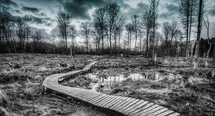 Hareskoven, Denmark | Flickr - Photo Sharing!