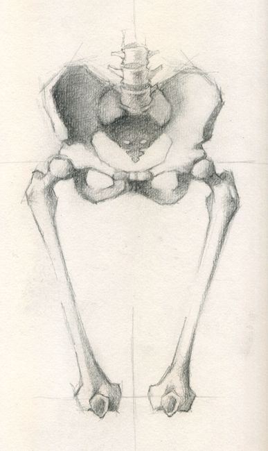 Anatomy Sketch - Jeff Haines