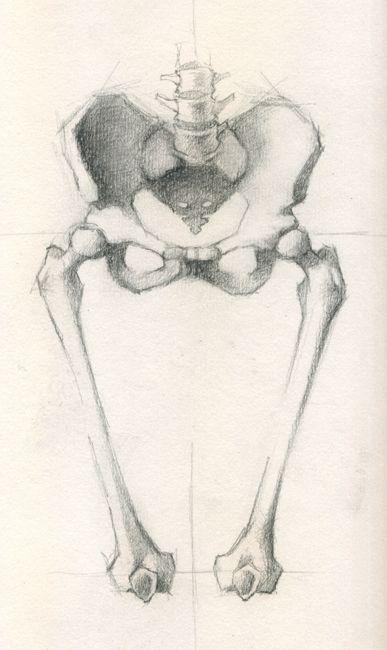 Anatomy Sketch - Jeff Haines