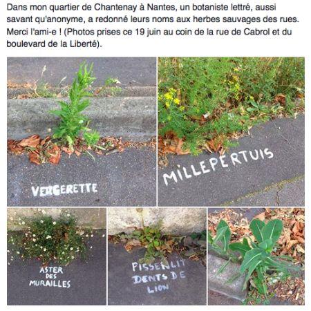 Pour les faire connaître à tous, une artiste peint le nom des végétaux des trottoirs de son quartier. L'initiative a séduit la France via Facebook.