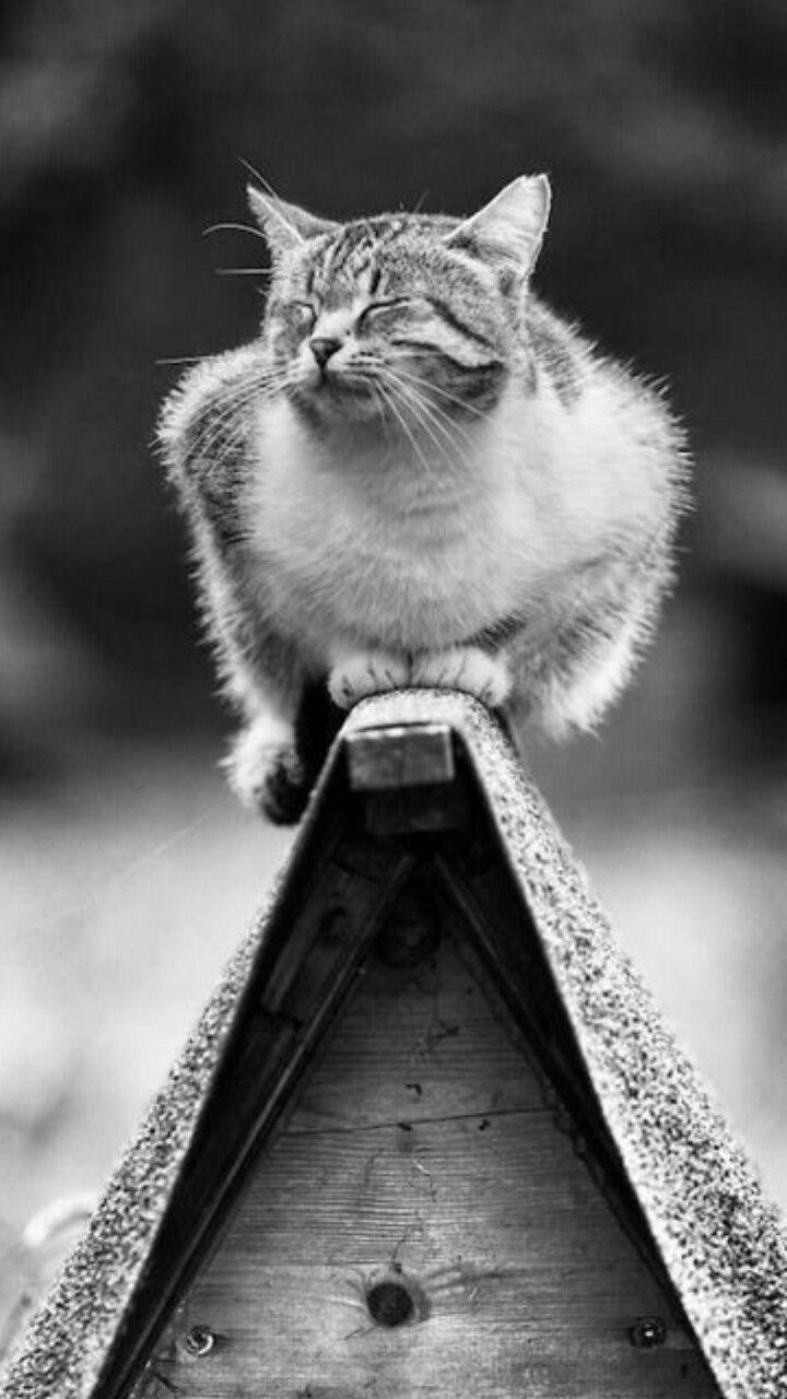 Pin Von Mev Auf Chat Katzen Kleine Katzen Katzen Bilder