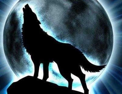 Décidément, les loups-garous...