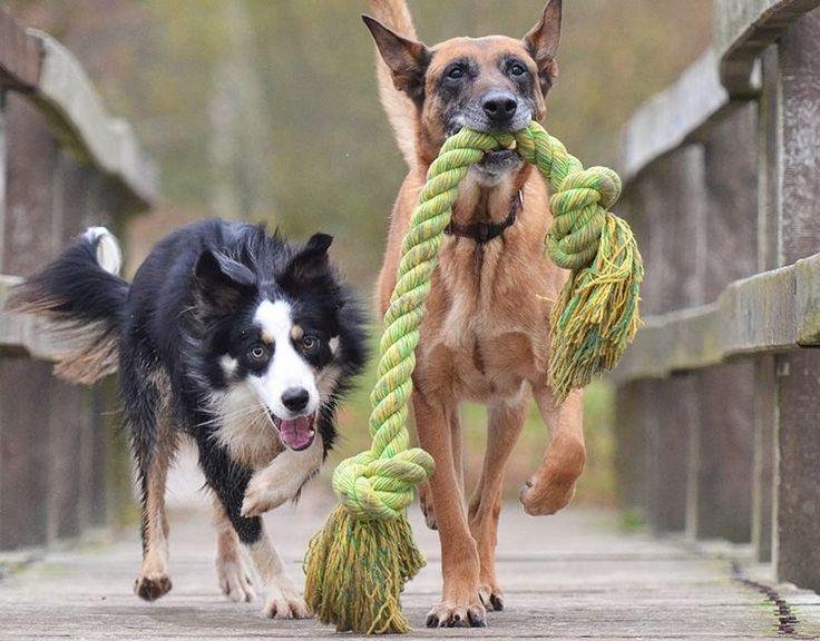 Haz mordedores para perros paso a paso, reciclando ropa vieja! (Video tutorial) Consigue tu propio juguete mordedor para perro muy resistente con camisetas