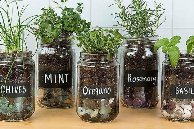 I want an entire windowsill of these in my kitchen!   Make An Adorable Herb Garden With Old Glass Jars