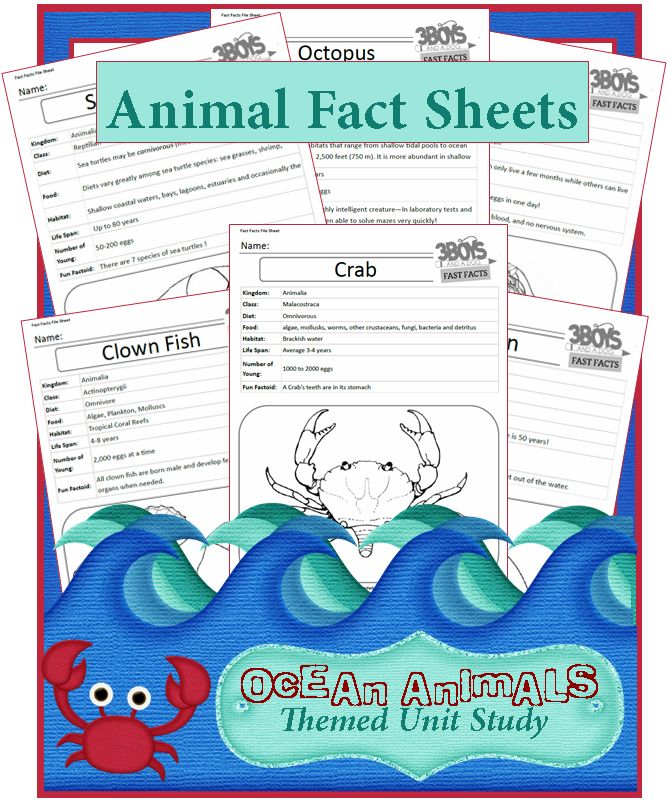 Ocean Animal Fast Fact Files -- Facts About Ocean Animals {Unit Study Series}