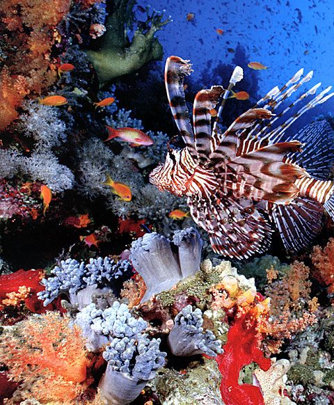 25+ Best Ideas About Coral Reefs On Pinterest