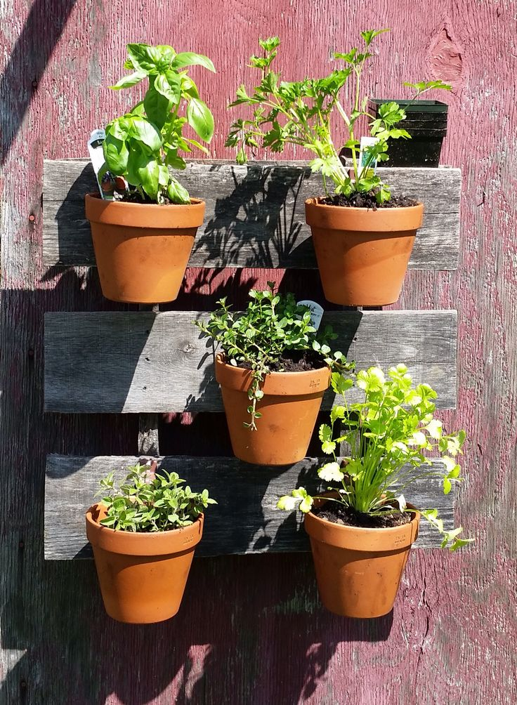 vertical herb garden in clay pots