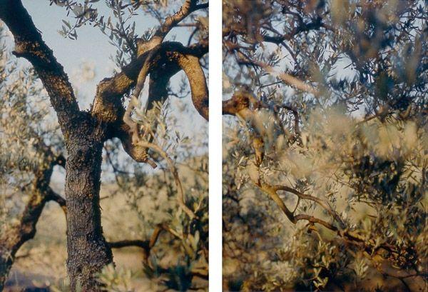 JoAnn Verburg 'Present Tense'