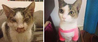 Развлечения, красивые фото, юмор, интересные моменты.: Твори добро: 25 кошек, до и после того, как их под...