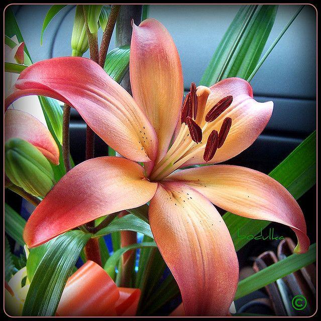 Orange Lily- tattoo idea JENNY!!!!!!!!! Isn't this beautiful?