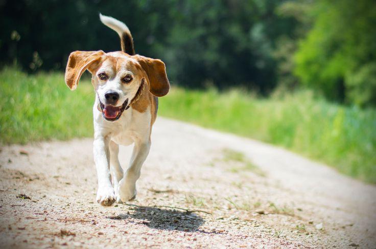 Am liebsten sehe ich mir Bilder von laufenden Hunden an, es ist faszinierend wie schnell unsere Vierbeiner unterwegs sind und wir diese Dynamik auf einem einmaligen Bild einfrieren können. Aber das…