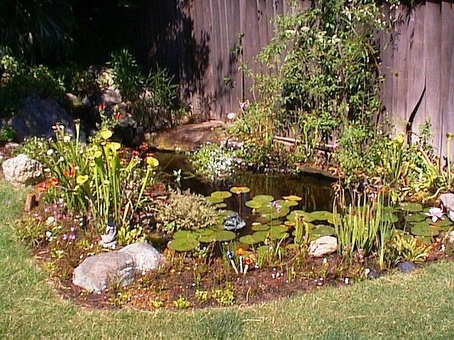 28 Best Bog Garden Images On Pinterest Backyard Ponds