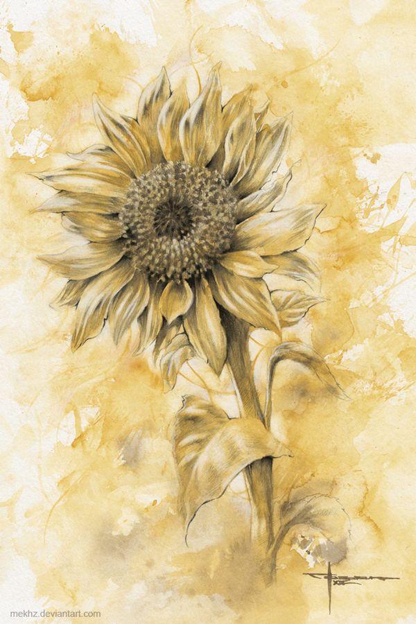 Sunflower by mekhz.deviantart.com on @deviantART
