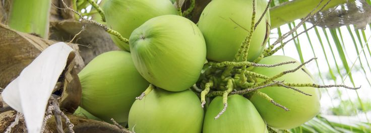 Is Coconut Water Good For You? Does It Have Fat or Sugar? | Pritikin