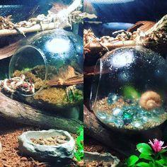 ♥ Pet Fish Stuff ♥ A glass fish bowl turned on it's side.