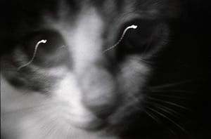 The tongue-sucking genius of Masahisa Fukase –in pictures  In 1978, Fukase's kitten Sasuke – named after a cartoon ninja – disappeared. 'I put up about 100 lost cat posters,' he wrote, 'but he still didn't come back.' A woman called him about a stray that 'looked just like the cat on the poster', but Fukase realised it was not Sasuke. 'Well,' he thought, 'let's go with this guy anyway.' And he took in Sasuke No 2. This image of his cat was altered to chime with the previous 1992…