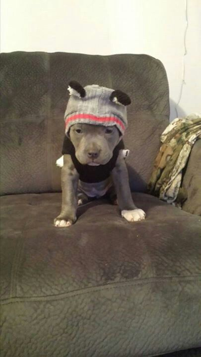So the dog is dressed to go out in the cold, but he's still not ready? Adorable!! <3 <3