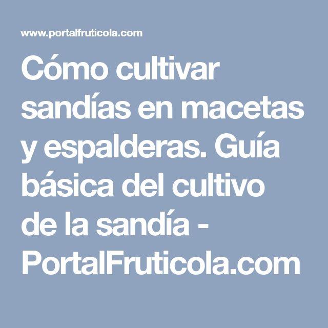 Cómo cultivar sandías en macetas y espalderas. Guía básica del cultivo de la sandía - PortalFruticola.com