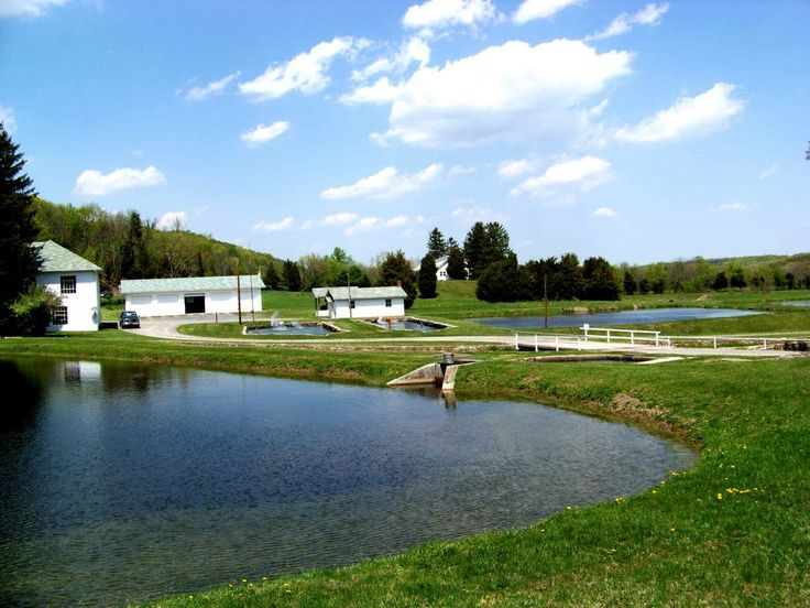 1000 images about morgan county west virginia on pinterest for Virginia fish hatchery