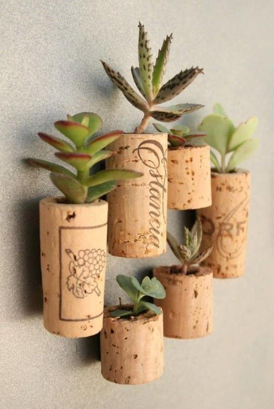 tiny garden succulents in corks.