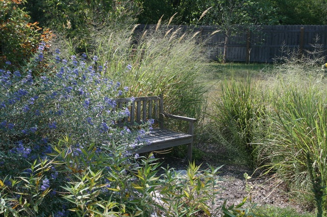 74 best images about gardening shade wooded area on for Tall ornamental grasses for shaded areas