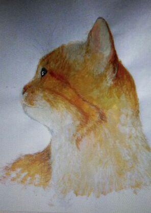 Ginger Cat Mizi    © Felia Brücker