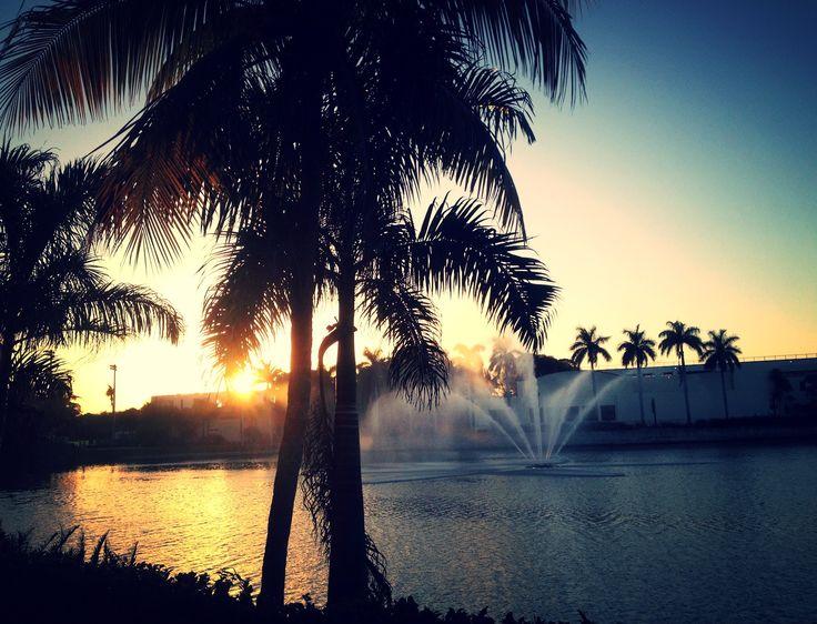 University of Miami campus sunset.