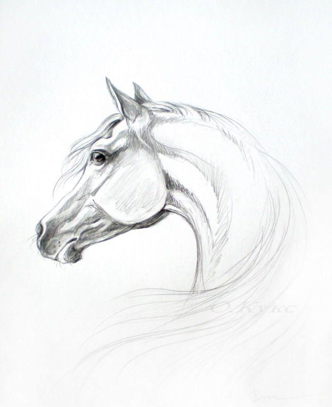 картинки простого рисунка лошади спектр профессионального