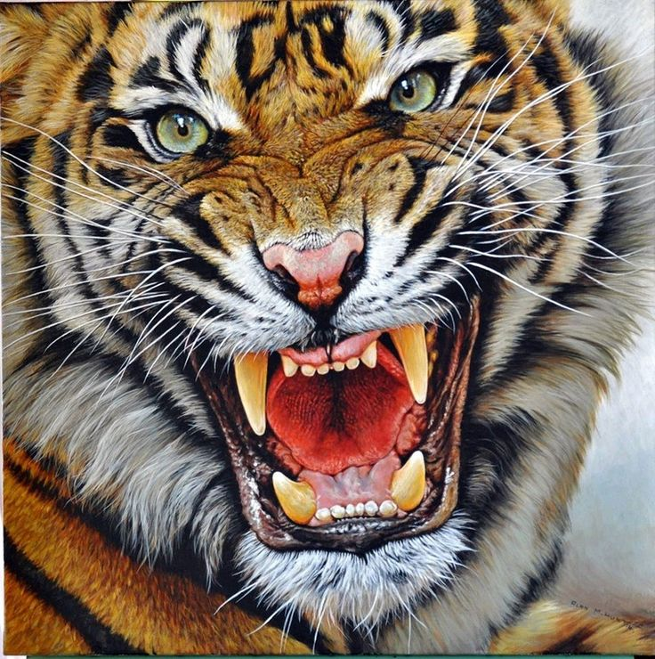 Original Tiger Paintings Indian African Bengal Siberian Tigress Cubs Ranthamboure The Watchmen Close Enough The Warrior Tigers for sale by Alan M Hunt best