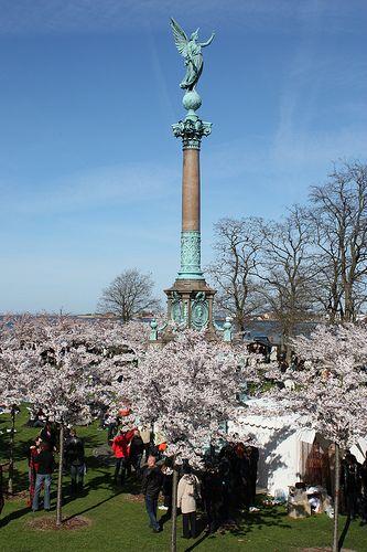 Japanese Cherry tree festival in Copenhagen