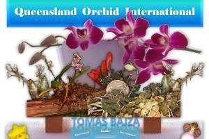 How to Grow Miniature Orchids in Simple Indoor Setups  https://queenslandorchid.wordpress.com/2015/11/18/how-to-grow-miniature-orchids-in-simple-indoor-setups/