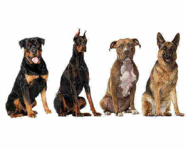 Dog Breeds Banned In Germany 2017 Dog Breeds Banned In Germany