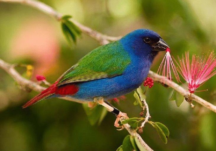 резком нарушении птица амарант фото сыграла еще