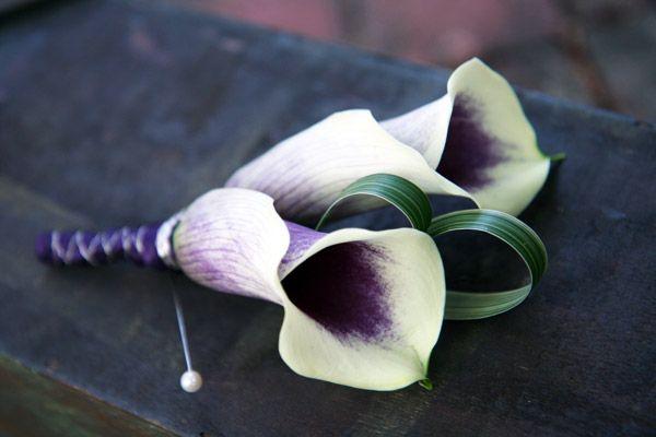 purple boutonniere for wedding   purple picaso calla lily boutonniere by alana.d.scott