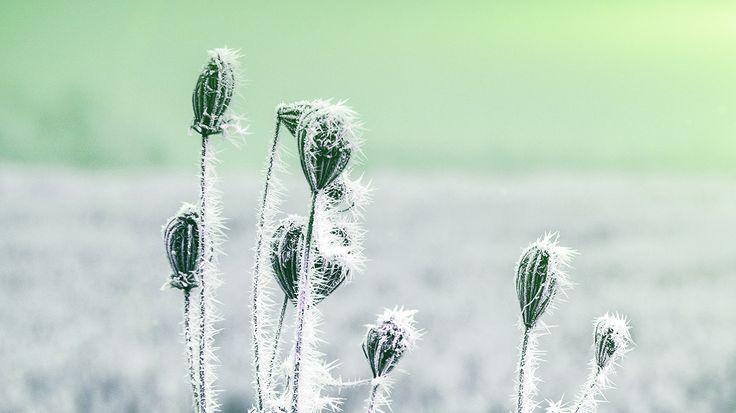 Wallpaper: http://desktoppapers.co/mt48-snow-cold-winter-flower-bokeh-nature-flare-green/ via http://DesktopPapers.co : mt48-snow-cold-winter-flower-bokeh-nature-flare-green
