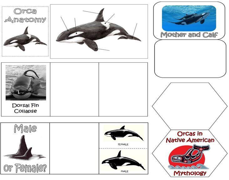 11 Best Orca Ocean Unit Images On Pinterest Ocean Unit Killer