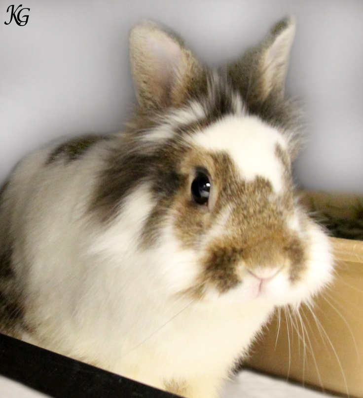 "Meet Topsy.  A bunny who was sheltered by the Cleveland Animal Protective League.  You can help Topsy and other neglected animals by ""liking"" www.facebook.com/WKYC.Channel3 on Facebook.  We'll donate $2500 to the APL if we get 75,000 fans by March 22nd."