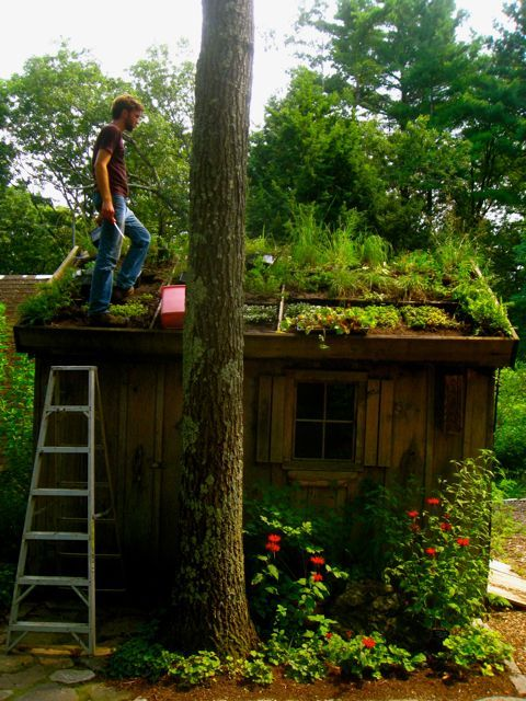 Living roof via Wilder #potting shed, #living roof En Socyr somos especialistas en Impermeabilizacion con epdm resitrix totalmente adherido de Cubiertas ajardinadas Green roofs insulate like a blanket, saving energy; they provide natural habitats for birds, butterflies, honeybees, lady bugs, and migrating birds. On this roof, soil depth ranges from four to eight inches. Más información en www.socyr.com 962712423