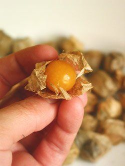 The first time we saw a Cape gooseberry, it was on someone's blog, and it looked like a perfect yellow egg yolk encased in paper leaves. We really thought someone took a photo of an egg yolk. It wasn't, of course - it was a Cape gooseberry. Cape gooseberries are native to South America, and they're closely related to the tomatilla - which makes sense, since they look like tiny tomatillas, swaddled in tissue leaves. We were surprised how small they are, though - click through for a photo of…