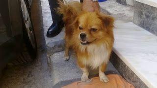 Βρέθηκε στην Πειραϊκή το αρσενικό σκυλάκι της φωτογραφίας. Επείγει φιλοξενία