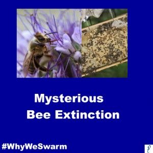 "Mysterious Bee Extinction - netzfrauen- netzfrauen ""When the bee is gone from the Earth, humans will be able to survive for four years only. No bees, no pollination, no plants, no animals, no humans."""