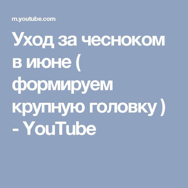 Уход за чесноком в июне ( формируем крупную головку ) - YouTube