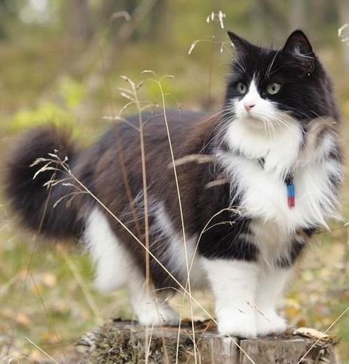 19 Best Cats Images On Pinterest Black Cats White Cats