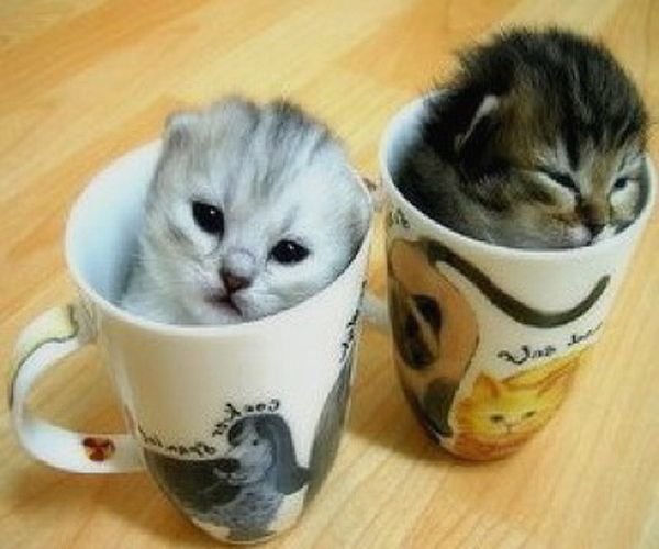 25+ best ideas about Teacup persian kittens on Pinterest ...