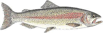 Peixe Truta 3 Peixe Truta