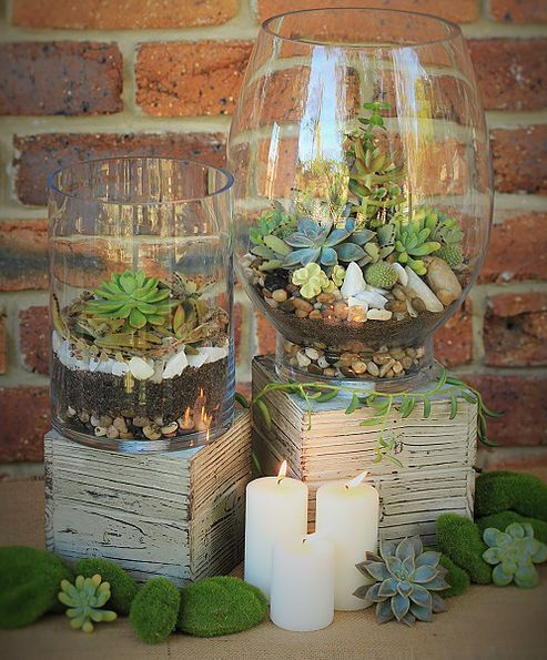 Large hurricane glass vase terrarium with an assortment of succulents including jade plants, rosettes and cactus. Available for wedding hire from Succulent Centrepieces.                                                                                                                                                      More