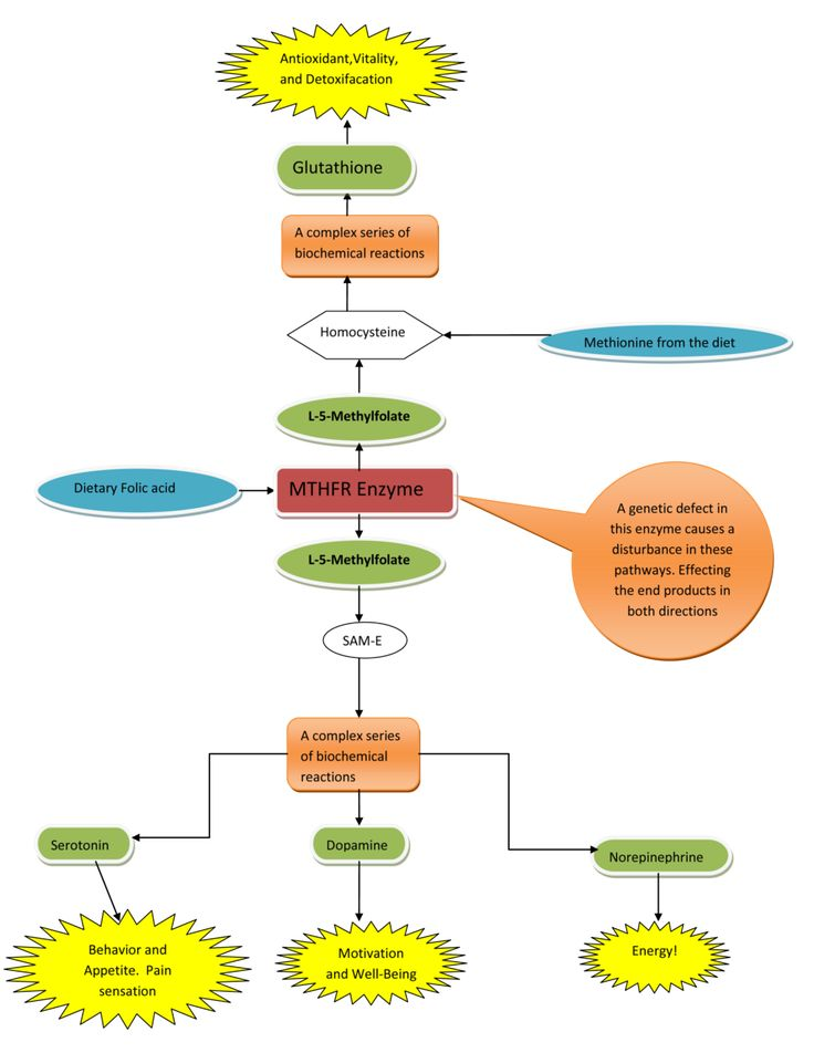 MTHFR information, MTHFR Cure MTHFR Information
