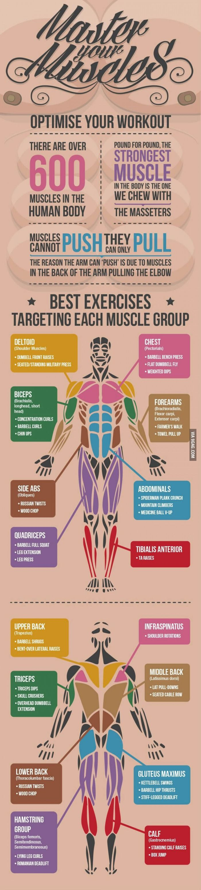 Best workouts available for each muscle