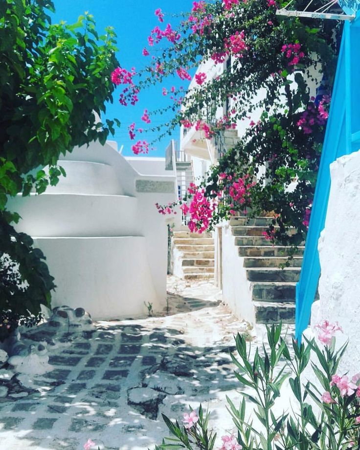 "Cyclades , Greece (Κυκλάδες) (@cyclades_islands) στο Instagram: ""Antiparos island (Αντίπαρος) Beautiful paved alley with blossomed lovely flowers ❤ Nice pic by…"""