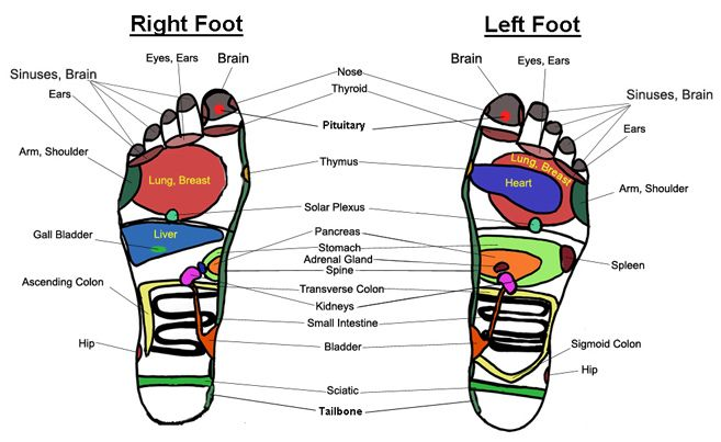 "Reflexology is the ancient art and science of massaging the feet and / or hands using a technique designed to address a system of pressure points. The idea is that specific areas of the foot or hand correspond to each part of the body, which are ""mapped out"" onto the hand or foot as in the charts. Check out our reflexology hand and foot charts!"